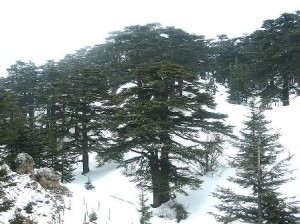 Cedar Grove Bcharre Bsharri
