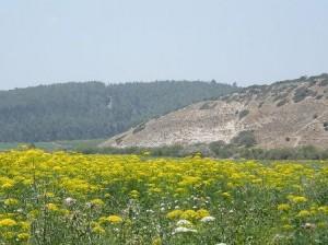 Khirbet Qeiyafa David Goliath