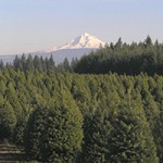 CLACKAMAS COUNTY TREE FARMS