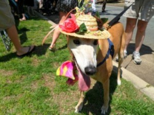 Richmond Easter Parade (richmondpetlovers.com)